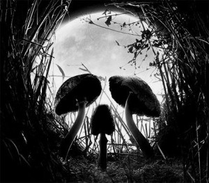 illusion-mushrooms-skull